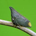 Thorny treehopper