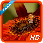 Honey Bee HD wallpapers