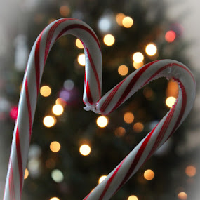 Candy canes and bokeh by Desiree DeLeeuw - Public Holidays Christmas ( festive, christmas lights, christmas, candy canes, christmas tree, bokeh, mood, mood factory, holiday, hanukkah, red, green, lights, artifical, lighting, colors, Kwanzaa, blue, black, celebrate, tis the season )