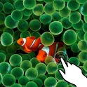 Magic touch:Clownfish & corals icon