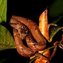 Common mock viper