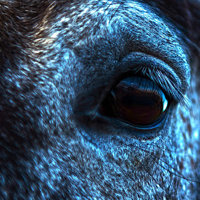 by Becky Woodall - Animals Horses