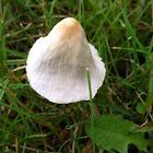 White Dunce's Hat