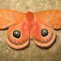 Mariposa olho-de-boi
