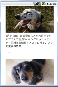 『ペットの命』犬・猫里親募集情報 -首都圏版-のおすすめ画像3