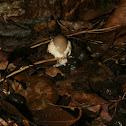 Mushroom on poop