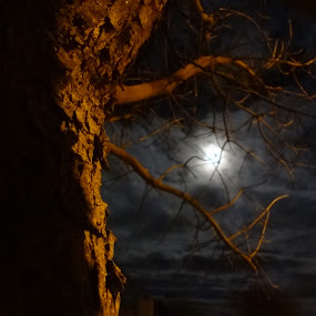 creepy but calm by Serenity Deliz - Nature Up Close Trees & Bushes ( clouds, moon, tree, serenity, nightime, night )