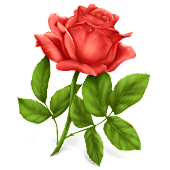 Lovely Roses Live Wallpaper