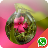 Dew Wallpapers for WhatsApp