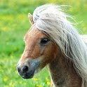 Little Pony Gallery Wallpapers icon