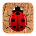 Ladybugs icon