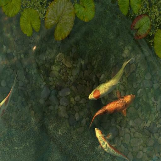 Download 3d koi pond for pc for Runescape koi pool