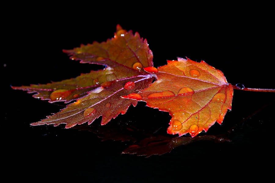 by Simon Yue - Nature Up Close Leaves & Grasses ( fall leaves on ground, fall leaves )