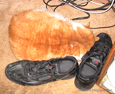 My cat Menelaus sleeping on my shoes.