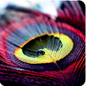 Color Feathers CLauncher Theme icon