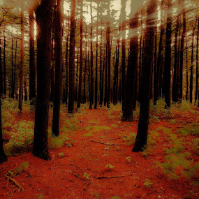 Save the green of the planet ! by Plamen Valkovski - Landscapes Forests