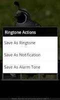 Screenshot of Bird Sounds & Ringtones