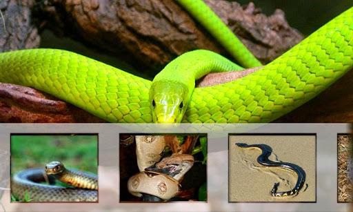 最危险的蛇