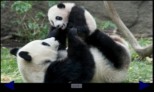 Panda Gallery HD screenshot 3