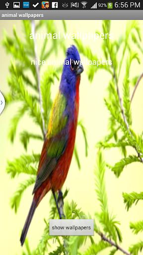 玩攝影App|5- Animals wallpapers 2014免費|APP試玩