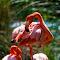 Flamingopix.jpg