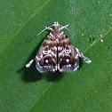 Mariposa saltadora