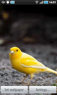 Yellow Bird - screenshot thumbnail