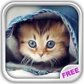 Cute Kittens Live Wallpaper