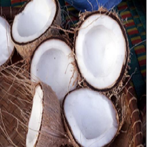 Oraculo de los cocos