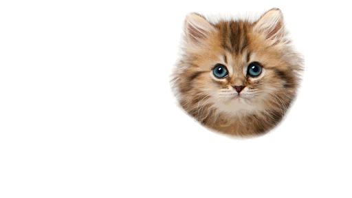 Kitten Sniffer 2