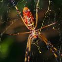 Golden Silk Orb-Weaver