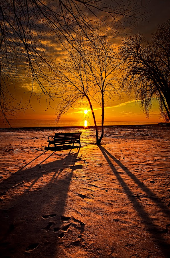 Left Behind by Phil Koch - Landscapes Prairies, Meadows & Fields ( vertical, summer. spring, photograph, bench, farmland, yellow, leaves, storm, love, sky, nature, autumn, snow, flowers, flower, wind, orange, twilight, agriculture, horizon, portrait, environment, winter, season, national geographic, serene, trees, floral, inspirational, wisconsin, natural light, phil koch, spring, sun, photography, farm, ice, horizons, rain, inspired, office, clouds, green, scenic, morning, shadows, wild flowers, field, red, blue, sunset, peace, fall, meadow, sunrise, earth, landscapes, , public, furniture, object )