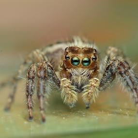 by Niney Azman - Animals Insects & Spiders ( makro laman putri mandi )
