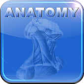 Human Anatomy II Lite