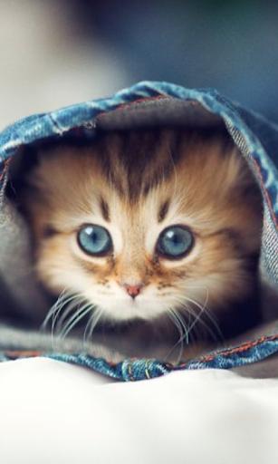 Komik kedi yavrusu duvar kağıd