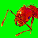 Ants Alive! Wallpaper icon