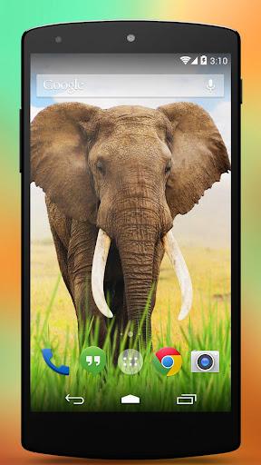 大象动态壁纸3D