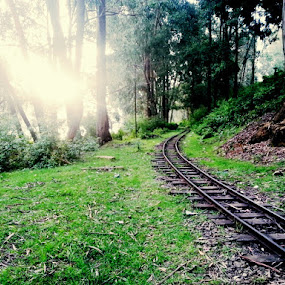 Mini Track by Karthic Kumar - Landscapes Forests ( nature, green, rail, train, forest, sun )