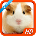 Hamsters HD Wallpapers icon