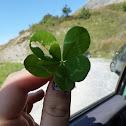 5 leafed clover