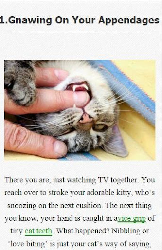 How to know your cat love you