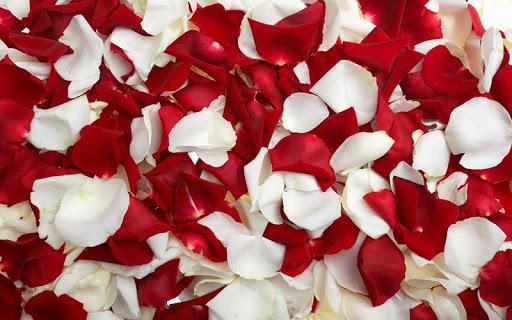Petals Wallpaper 3D