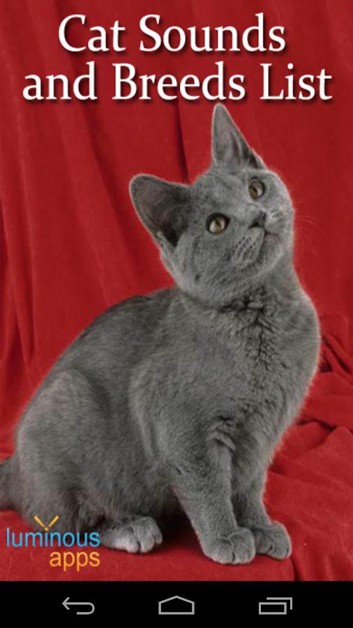ginger cat patronus