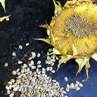 Roasted In-Shell Sunflower Seeds