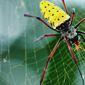 the yellow by Christian Nugroho - Animals Insects & Spiders
