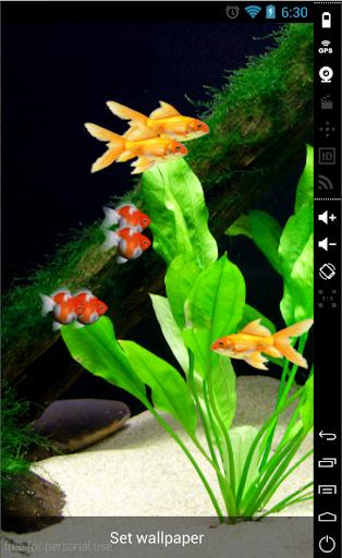Goldfish 3D LiveWallpaper Free
