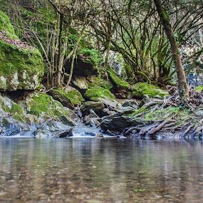 Grove by Ricardo Zambujo - Nature Up Close Natural Waterdrops