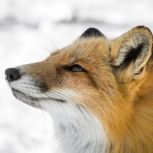 fox selects-35.jpg