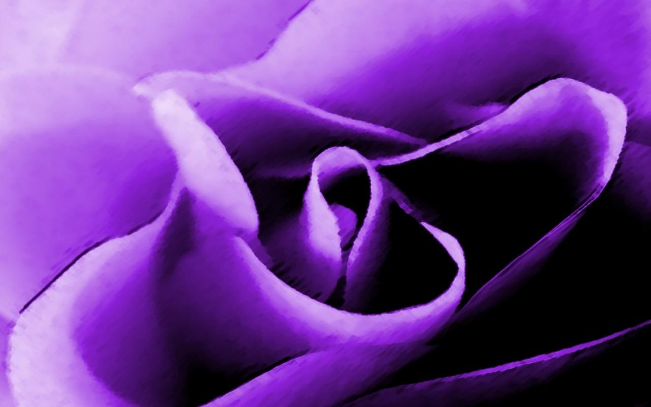 Rose Live Wallpaper - screenshot