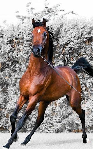 馬匹HD動態壁紙